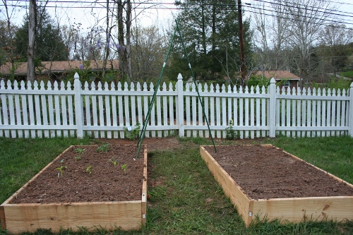 Troubleshooting a Raised Bed Garden